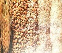 cereales-alimentacion-01