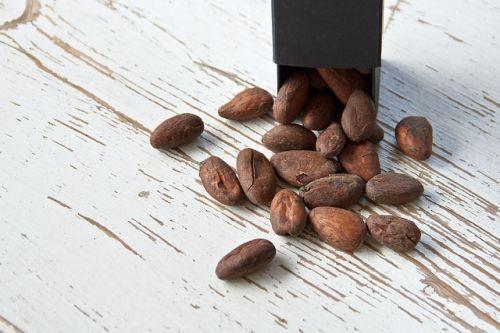 cacao-grano-cocoa-bean